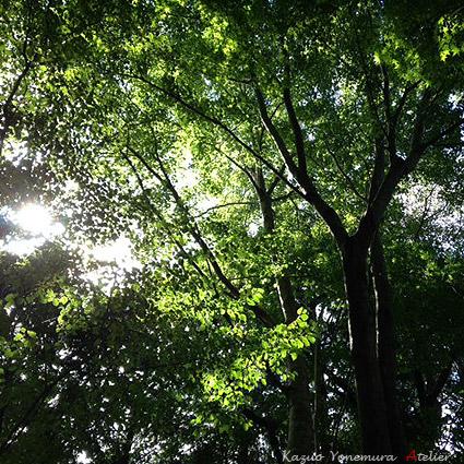 箱根仙石原森の中の家